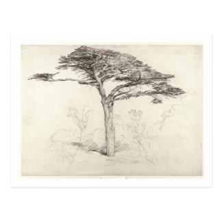 Old Cedar Tree in Botanic Garden, Chelsea, 1854 (p Postcard