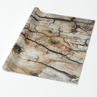 Old cracked wood natural tree bark picture