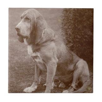 Old English Bloodhound Ceramic Tile