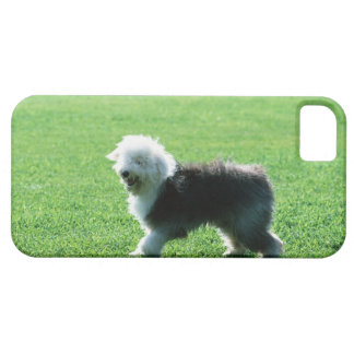 Old English Sheep Dog Barely There iPhone 5 Case
