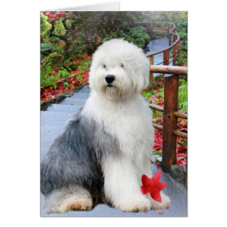 Old English Sheepdog Brings Sunshine to Day cards
