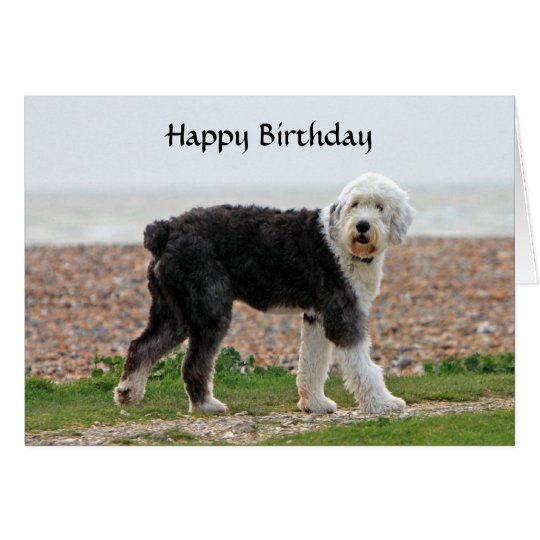 Old English Sheepdog dog birthday card, photo Card
