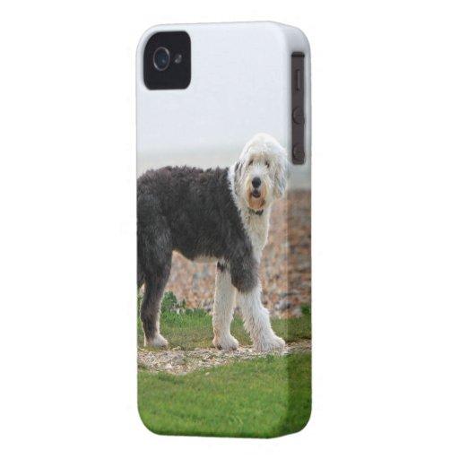 Old English sheepdog dog blackberry bold case