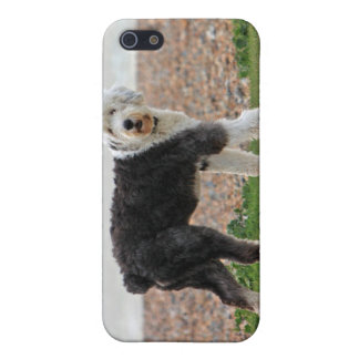 Old English Sheepdog dog iphone 4 case, gift iPhone 5/5S Covers