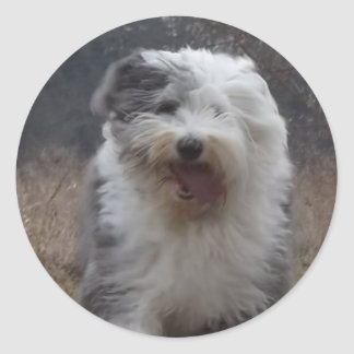 Old English Sheepdog Sticker - Run Dog!