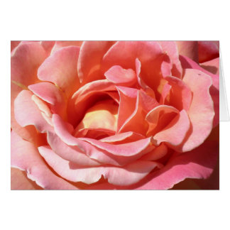 Old Fashioned Climbing Rose Card