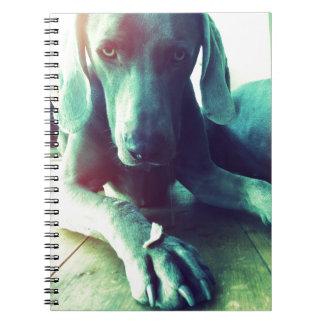 Old fashioned Weimaraner photo Note Book