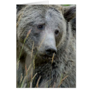 Old Grizzly Bear Card