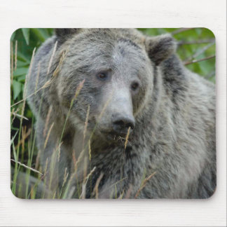 Old Grizzly Bear Mouse Pad