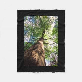 Old-Growth Beech Tree Fleece Blanket