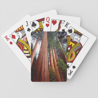 Old-growth Sequoia Redwood trees Playing Cards