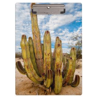 Old Man Cactus portrait, Mexico Clipboard