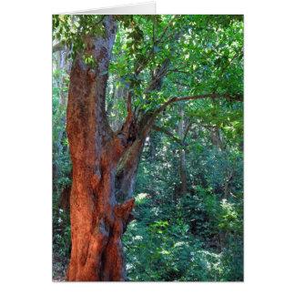Old Mango Tree Card
