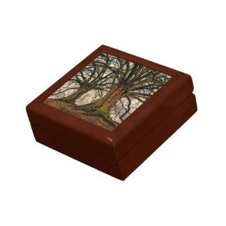 Old Oak Tree in Winter Gift Box