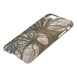 Old Oak Tree in Winter iPhone 8/7 Case