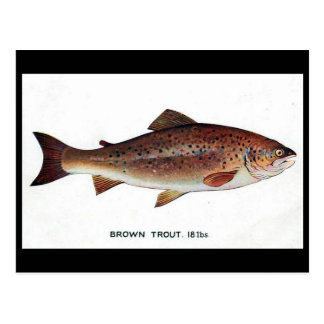 Old Postcard - Brown Trout