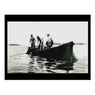 Old Postcard - Newfoundland, Cod Fishing