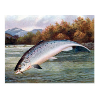 Old Postcard - Salmon