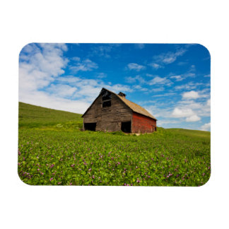 Old, red barn in field of chickpeas rectangular magnets