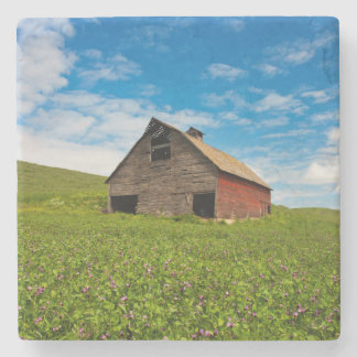 Old, red barn in field of chickpeas stone coaster