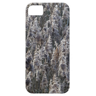 Old reed grass iPhone 5 case