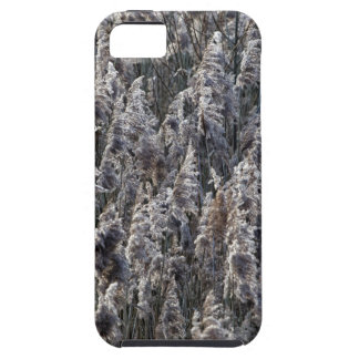Old reed grass iPhone 5 covers