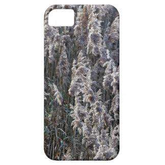Old reed grass on a winter day. iPhone 5 cases