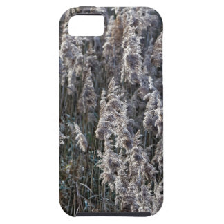 Old reed grass on a winter day. iPhone 5 covers