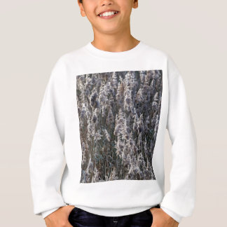 Old reed grass on a winter day. sweatshirt