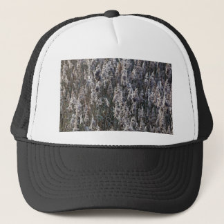 Old reed grass on a winter day. trucker hat
