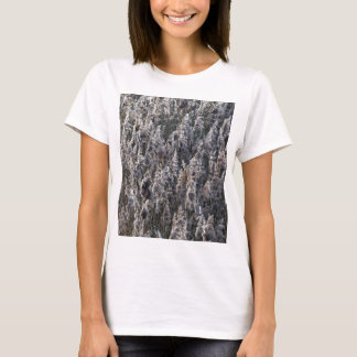 Old reed grass T-Shirt