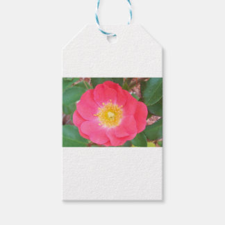 Old School Salmon colored rose Gift Tags
