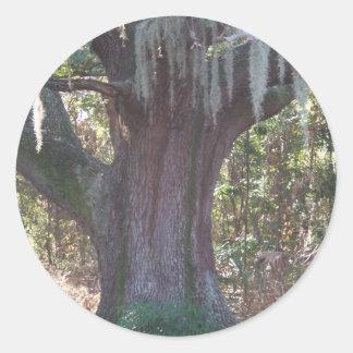 Old Tree Classic Round Sticker