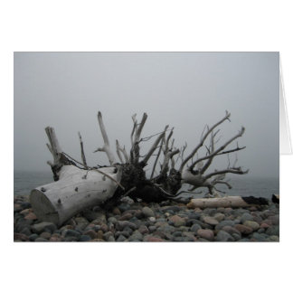 Old Tree, Driftwood by the Ocean Card