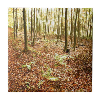 OLD TREES WITH LEAVES ON GROUND IN AUTUMN SMALL SQUARE TILE