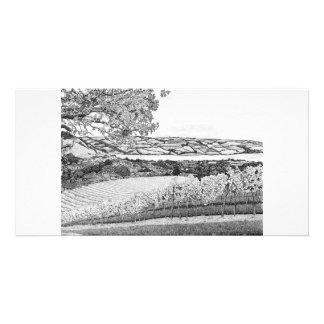 Old Walls Vineyard - Photo Card