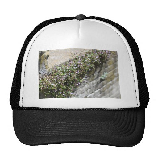 Old World Charm and Romance Trucker Hat