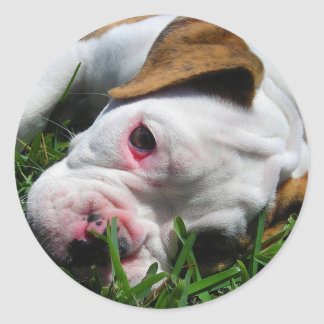 Olde English Bulldog Puppy Round Sticker