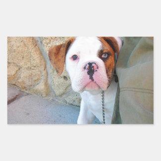 Olde English Bulldog Puppy Rectangle Sticker