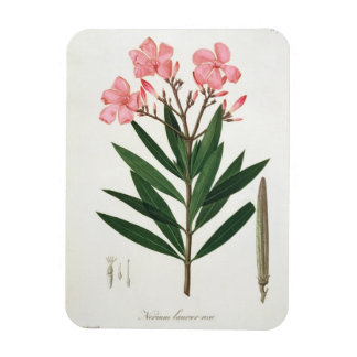 Oleander from Phytographie Medicale by Joseph Ro Rectangular Magnet