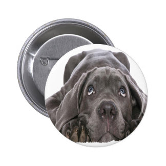 olhar de cachorro boton