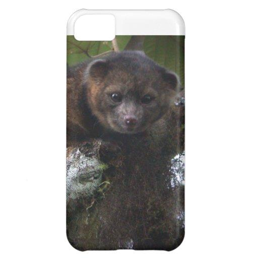 Olinguito (Bassaricyon neblina) new mammal iPhone 5C Case