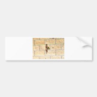 OLIVE BACK SUNBIRD QUEENSLAND AUSTRALIA BUMPER STICKER
