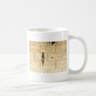 OLIVE BACKED BIRD QUEENSLAND AUSRALIA COFFEE MUG