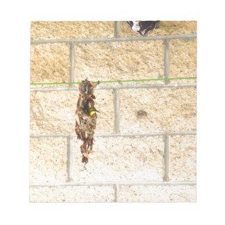 OLIVE BACKED BIRD QUEENSLAND AUSRALIA NOTEPAD