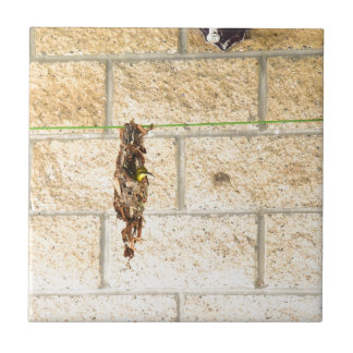 OLIVE BACKED BIRD QUEENSLAND AUSRALIA TILE