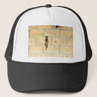OLIVE BACKED BIRD QUEENSLAND AUSRALIA TRUCKER HAT