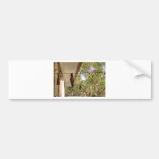 OLIVE BACKED BIRD QUEENSLAND AUSTRALIA BUMPER STICKER