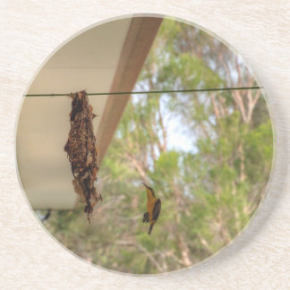 OLIVE BACKED BIRD QUEENSLAND AUSTRALIA COASTER