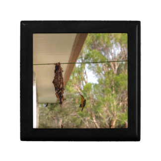 OLIVE BACKED BIRD QUEENSLAND AUSTRALIA GIFT BOX
